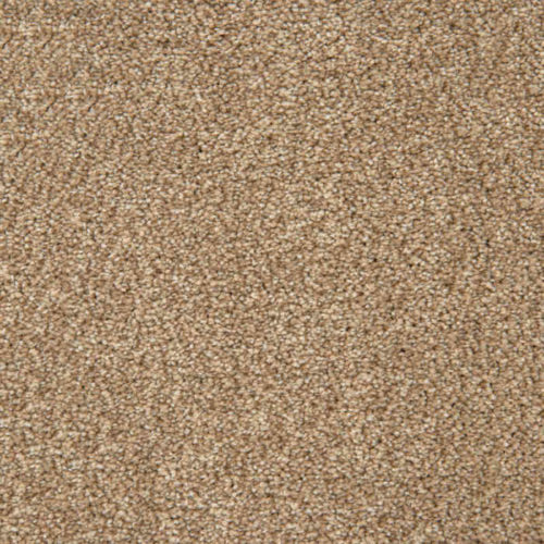 Loving Touch Sable Carpet Love Story Collection Abingdon Flooring Moseley Interiors